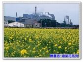 陳春吉老師-油菜花系列:36A-040.jpg