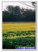陳春吉老師-油菜花系列:0A-009.jpg