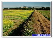 陳春吉老師-油菜花系列:2-001.jpg