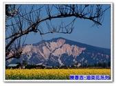 陳春吉老師-油菜花系列:8-018.jpg