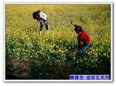陳春吉老師-油菜花系列:9A-010.jpg