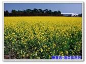 陳春吉老師-油菜花系列:11A-011.jpg