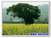 陳春吉老師-油菜花系列:13A-038.jpg