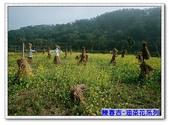 陳春吉老師-油菜花系列:15A-033.jpg