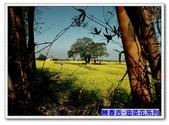 陳春吉老師-油菜花系列:16-023.jpg