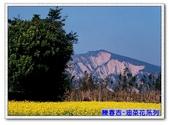 陳春吉老師-油菜花系列:20A-013.jpg