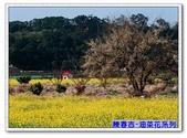 陳春吉老師-油菜花系列:21A-004.jpg