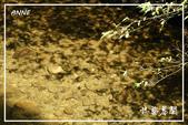 平湖步道:DSCN5424P06.jpg