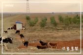 北疆:a0 (88)P97.jpg