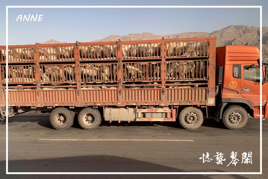 北疆:j (11)P12.jpg