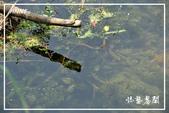 水車寮猴坎水圳:DSC_0245P53.jpg
