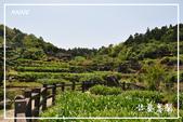 水車寮猴坎水圳:DSC_0264P70.jpg