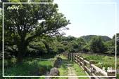 水車寮猴坎水圳:DSC_0255P61.jpg