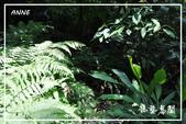 水車寮猴坎水圳:DSC_0350P128.jpg
