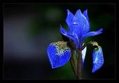 花:花之美宴.n.jpg