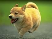 狗狗和熊熊:跑.jpg