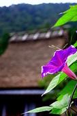 花草植物:夏が去って秋が来る.jpg