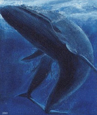 動物:クジラ.jpg