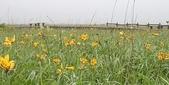 花:花の湿原.jpg