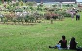 花草景物風景:愛の迷路.jpg