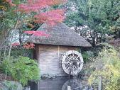 櫻花和椿和紅葉:楓(かえで) ・紅葉(もみじ)k.j