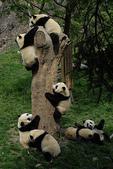 狗狗和熊熊:panda5.jpg