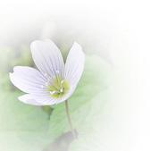 花:花兒.jpg