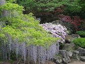 花草植物:露地.jpg