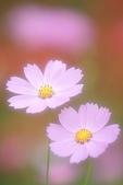 花草植物:1117.jpg