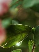 花草植物:曙光初露.jpg