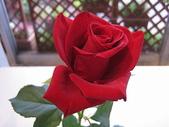 花:バラa7.jpg