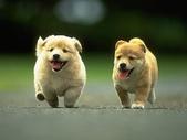 狗狗和熊熊:running.jpg
