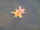 花草景物風景:寄り添って.jpg