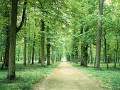 風景:forest.jpg