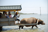 動物:水牛車