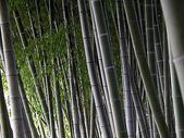 花草植物:竹.jpg