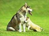 狗狗和熊熊:dog.衝啊.jpg