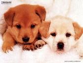 狗狗和熊熊:puppy.jpg