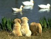 狗狗和熊熊:坐在池塘邊.jpg
