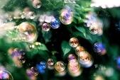 花草植物:シャボン玉.jpg
