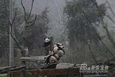 狗狗和熊熊:熊熊1.jpg