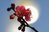 花:柳ヶ瀬ブルース-花a.jpg