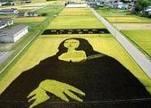 日本:日本的稻田藝術.g.jpg