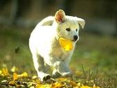 狗狗和熊熊:咬花.jpg