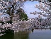 櫻花和椿和紅葉:賞花.jpg