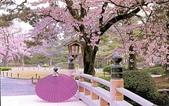 櫻花和椿和紅葉:20030702_ice9907_143119.jpg