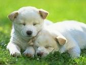 狗狗和熊熊:sleeping.jpg