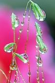 花草景物風景:苔の滴.jpg