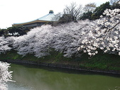 櫻花和椿和紅葉:さくらcc8.jpg