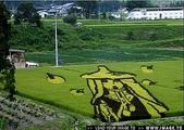 日本:日本的稻田藝術.f.jpg